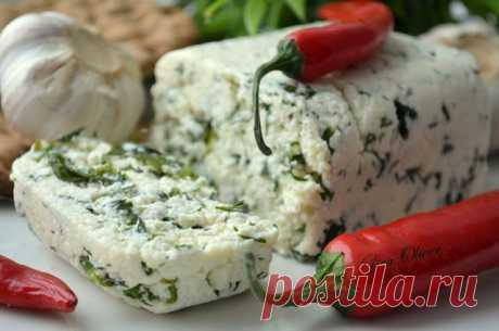 MY FOOD or is checked by Lisa: Fragrant cottage cheese with herbs and greens. Author: Elizabeth Lazareva.