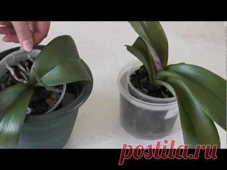 Видео - Как поливать орхидеи