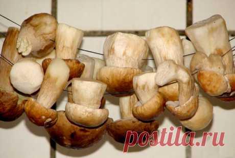 Как правильно сушить грибы | Идеальный огород | Яндекс Дзен