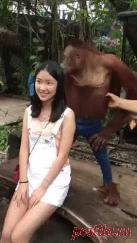 фото на память с гориллой