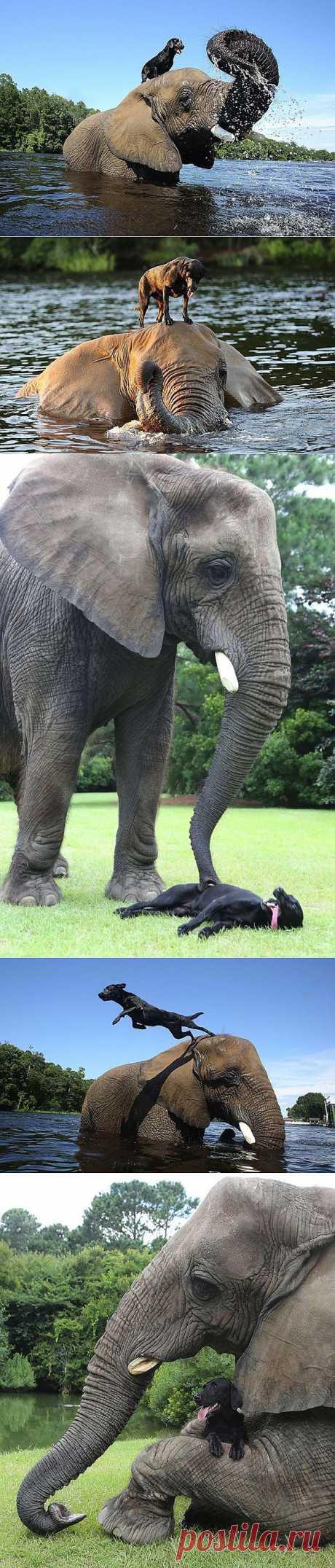 Лучшие друзья – собака и слон : НОВОСТИ В ФОТОГРАФИЯХ