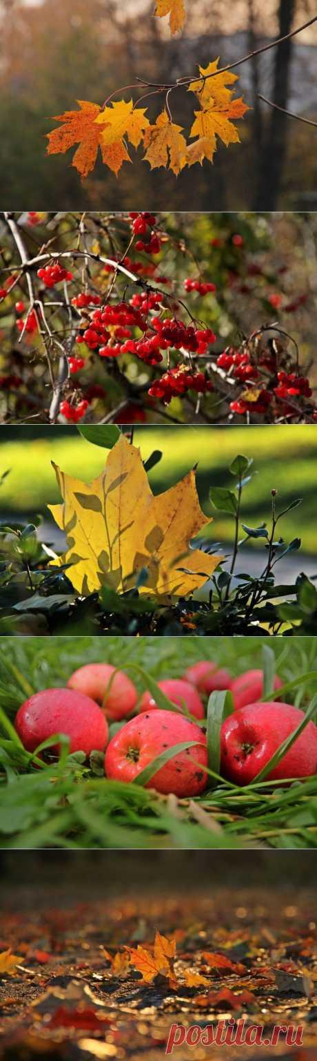 Осень рыжая подружка... | Фотоискусство