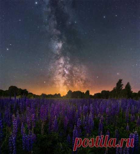 Млечный путь над цветущими люпинами, Рязанская область. Автор фото — Кирилл Пчелинцев. Доброй ночи.