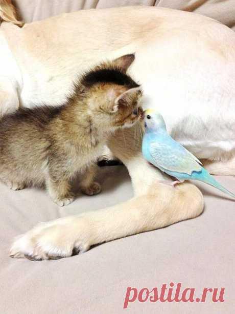 Очень трогательная история про кошечку Васаби