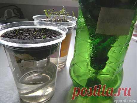 Выращивание рассады без полива. Автоувлажнение | vparnike.ru