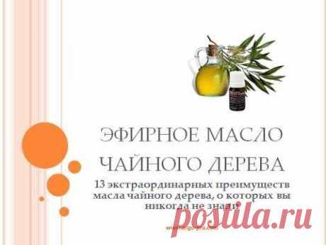 Масло эфирное Чайное дерево свойства и применение