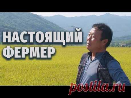 Один день с фермером. День сбора урожая риса | Моя Корея