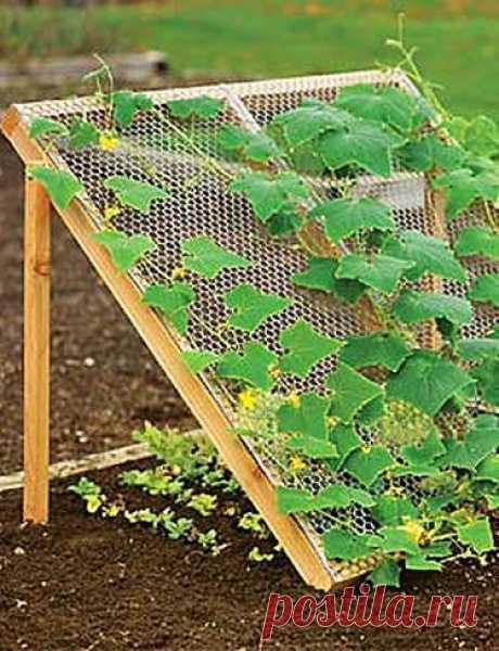 Найдено на сайте gardeners.com.
