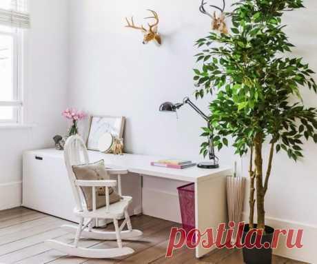 8 лучших комнатных растений-фильтров. Какие растения лучше очищают воздух? Список, фото — Страница 10 из 10 — Ботаничка.ru