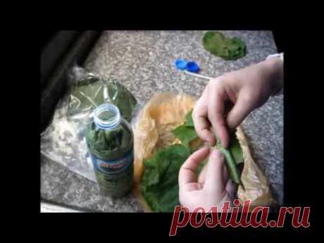 3 СПОСОБА ЗАГОТОВКИ виноградных листьев - YouTube