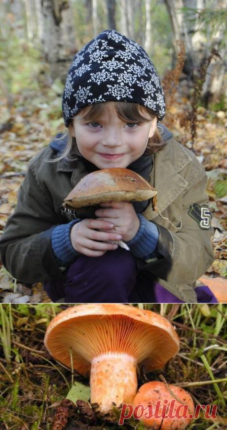 Грибы рыжики, описание с фото, польза, вред, где растут, как готовить