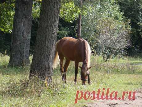 Конь.