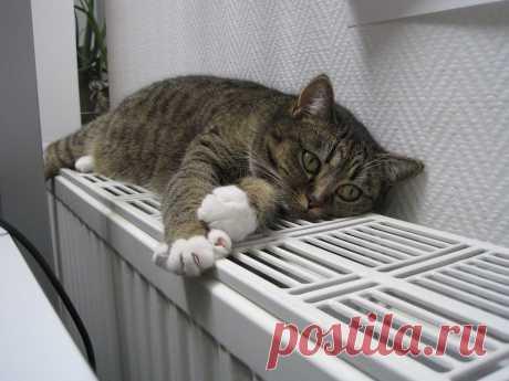 На улице похолодало. Когда в квартирах станет тепло?
