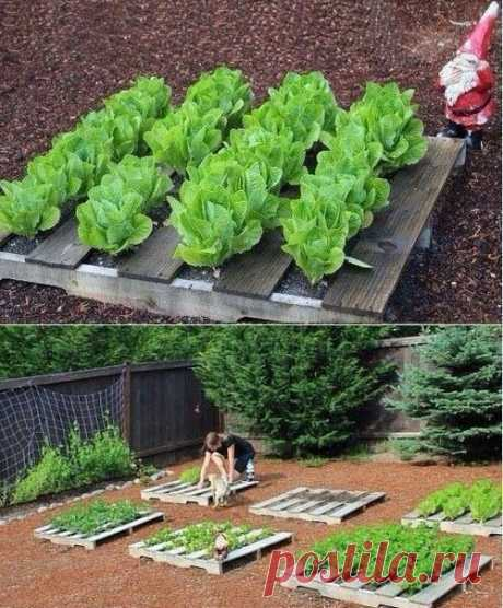 Как вам такая идея выращивания зелени?