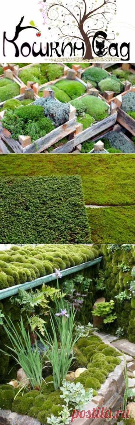 Садовый мох: Как украсить сад с помощью мха? - Кошкин Сад