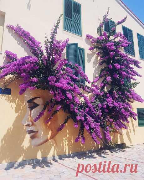Graffiti touch to spectacular Bougainvillea Photo: Nina Košak