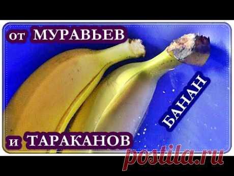 █ Как избавится от МУРАВЬЕВ и ТАРАКАНОВ / Банан, Желток и Борная кислота
