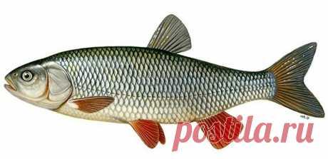 Места для рыбалки в Астрахани
