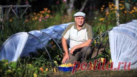 Как купить идеальный парник  Огородно-садовые страстити
