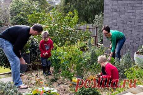 Как защититься от клещей на даче: народные средства для взрослых и детей, животных