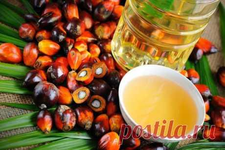 ༺🌸༻Пальмовое масло вредно или нет для человека, правда и вымыслы