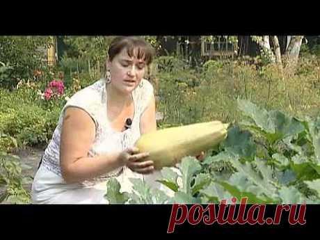 Тыквенные, Кабачки - Яндекс.Видео