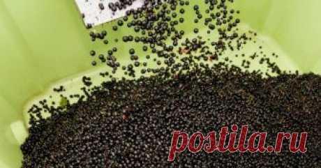 """5 секретов небывалого урожая смородины Смородина – самая """"народная"""" ягода. Этот кустарник очень часто можно встретить в садах средней полосы. Но все ли садоводы умеют добиться от куста смородины хорошего урожая?"""