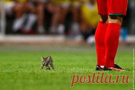 котенок и футбол