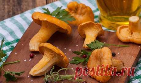 Настойки из лисичек на водке: 3 рецепта от разных болезней   Статьи (Огород.ru)