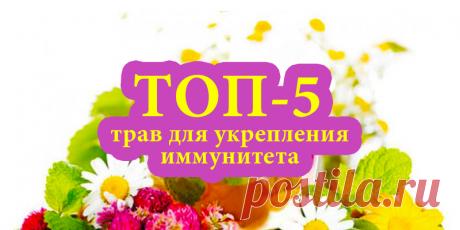 ТОП-5 трав для укрепления иммунитета | Полезные советы