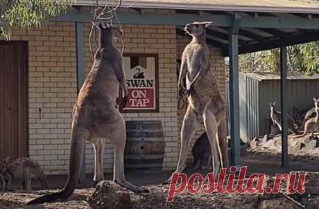 Для Австралии это обычное дело