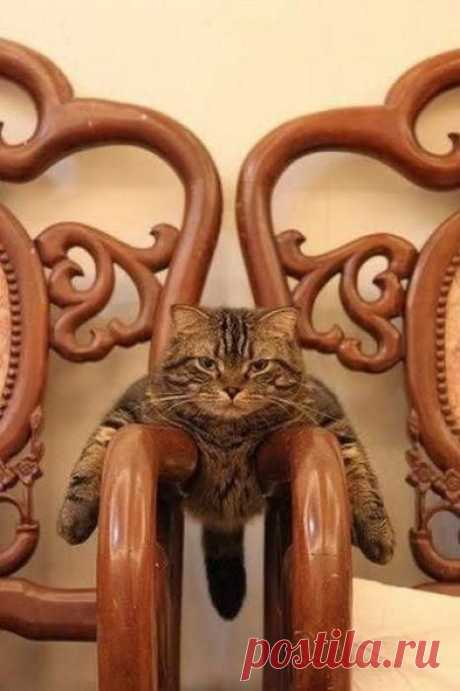 Кто сказал, что на двух стульях не усидишь?!