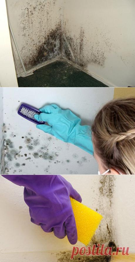 Средство от плесени на стенах в квартире – как избавиться раз и навсегда