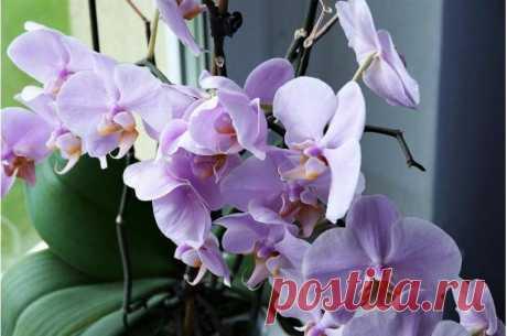 В марте подкормите комнатные растения удобрением из свёклы: будут обильно цвести