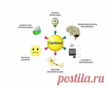 Почему так важен кортизол для организма Если кривая кортизола имеет резкие подъемы и падения, то такая ситуация считается более чем нормальной. Подобное поведение гормона стресса влияет на продолжительность жизни, которая значительно увеличивается.