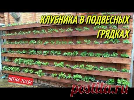 КЛУБНИКА В ПОДВЕСНЫХ ГРЯДКАХ/Весна-апрель.