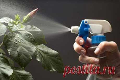 РЕЦЕПТЫ РАСТИТЕЛЬНЫХ ПРЕПАРАТОВ ПРОТИВ ВРЕДИТЕЛЕЙ  Полведра луковой шелухи залить ведром горячей воды (температура 60—70 °С), настоять в течение суток, процедить, разбавить водой (1:2) и применять для опрыскивания растений, пораженных тлей, паутинным клещиком огурца, трипсами и другими вредителями. Показать полностью…