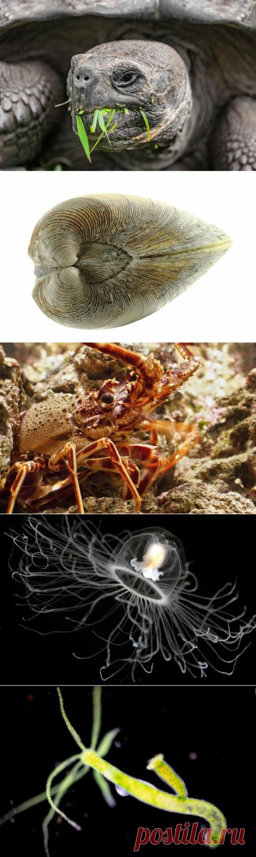 Достижимо ли биологическое бессмертие. Животные – долгожители | Планета зверей | Яндекс Дзен