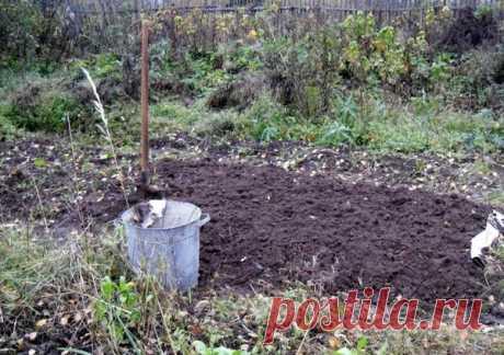 Сезонные работы в саду и огороде: конец сентября – начало октября