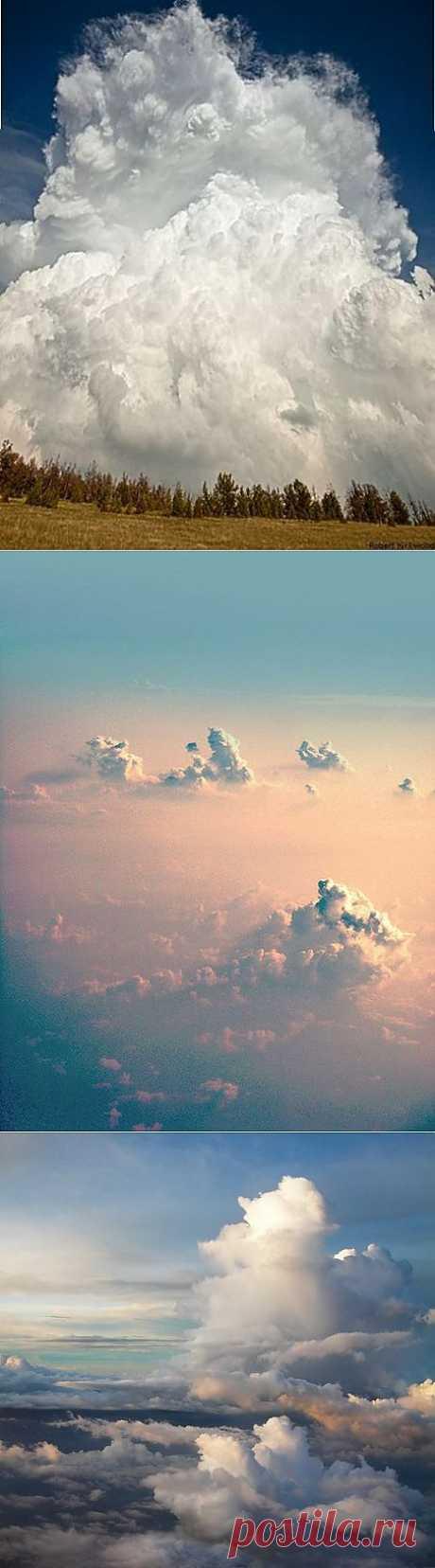 ¡Las nubes belogrivye los caballetes!