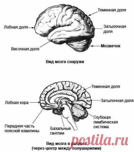 Дэниел Амен: 7 принципов изменения мозга и тела