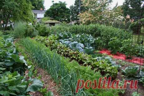 Совместимость растений на огороде