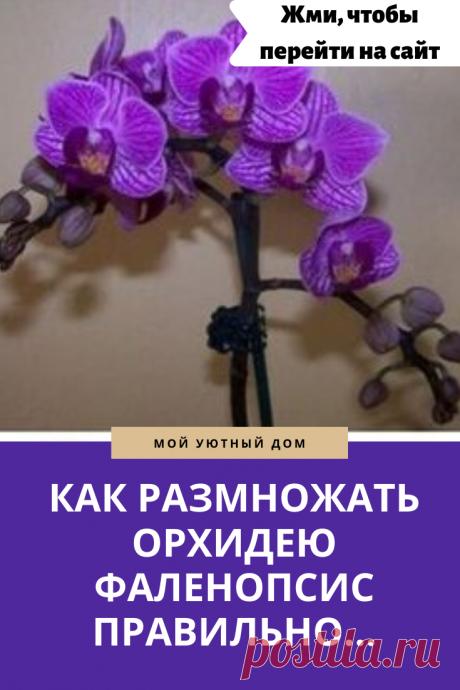 Советы как размножить орхидею