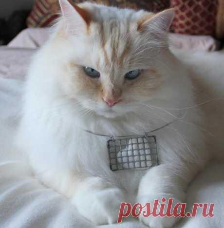 Оригинальные украшения из шерсти кота
