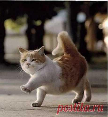 Cute Cats #2 | Cute Cats