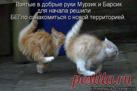 Новая котоматрица (36 фото) Предлагаем вашему вниманию свежую коллекцию замечательных котоматриц от популярного сайта и желаем приятного просмотра!Всем позитива и хорошего настроения!