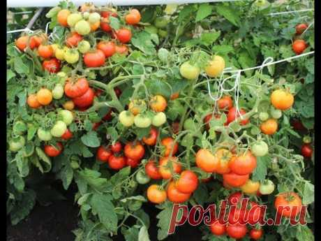 REMEMBER! WHAT TOMATOES IT IS ADVISABLE TO MAKE IT MUCH!!!