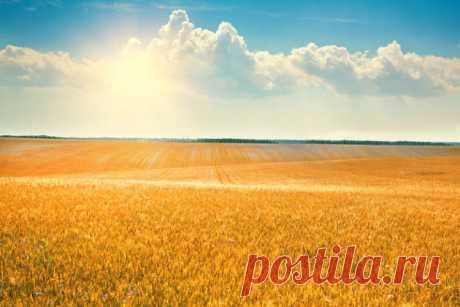 GISMETEO.RU: Народные приметы на 3 августа – Онуфрий Молчаливый, пророк Иезекииль - Климат | Новости погоды.