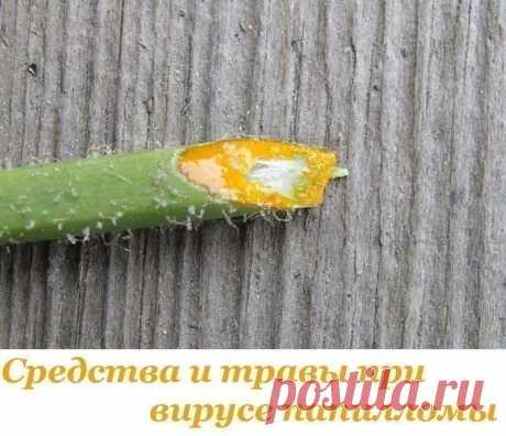 Средства и травы при вирусе папилломы Средства и травы при вирусе папилломы  Папиллома является инфекционной болезнью, возбудитель которой – ВПЧ (вирус папилломы человека). Хотя это заболевание определено официальной медициной как доброкачественное новообразование, и в большинстве случаев не грозит человеку серьёзными последствиями, лечить его всё-таки нужно. Существует около сотни разновидностей этого вируса, и избавиться от этого недуга в домашних условиях не так уж и сл...