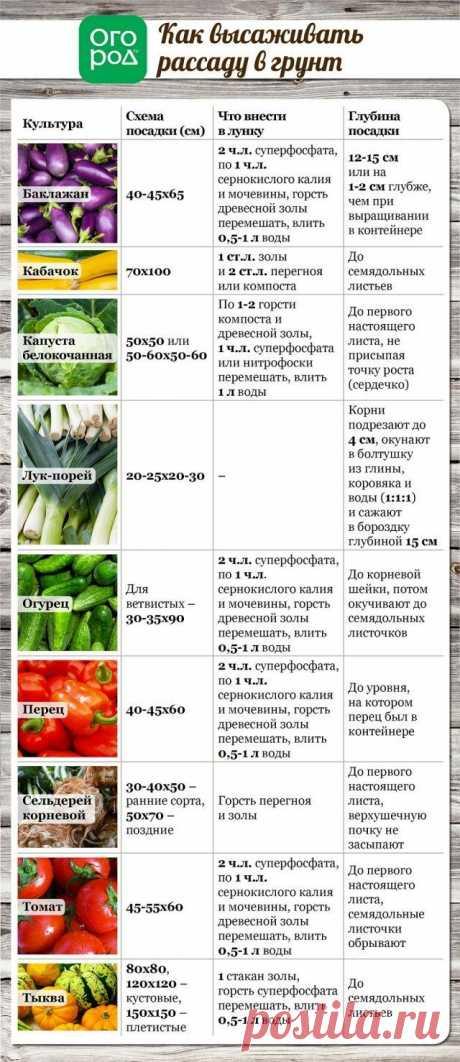 Все, что вы хотели знать о высадке рассады в грунт (в таблицах)   Рассада (Огород.ru)